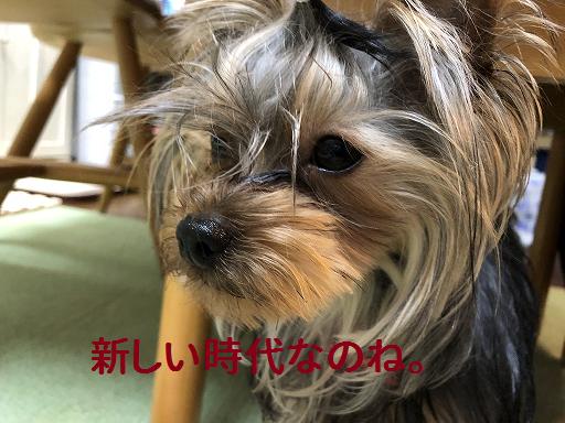 f:id:ogihara0308:20190506170749p:plain