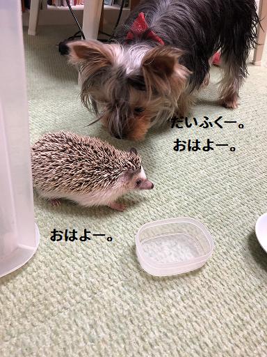 f:id:ogihara0308:20190506172140p:plain