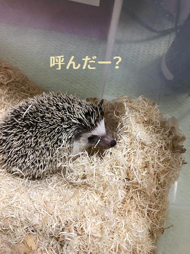 f:id:ogihara0308:20190506174421p:plain