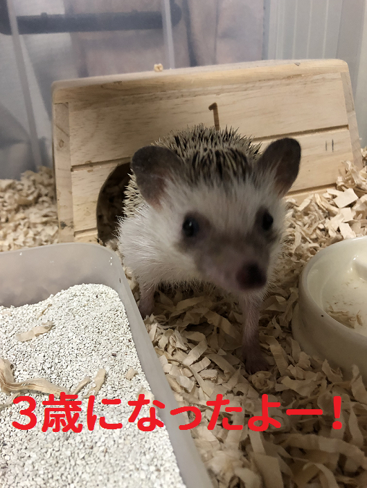 f:id:ogihara0308:20190901150224p:plain