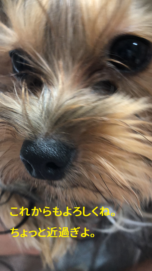 f:id:ogihara0308:20190901160325p:plain