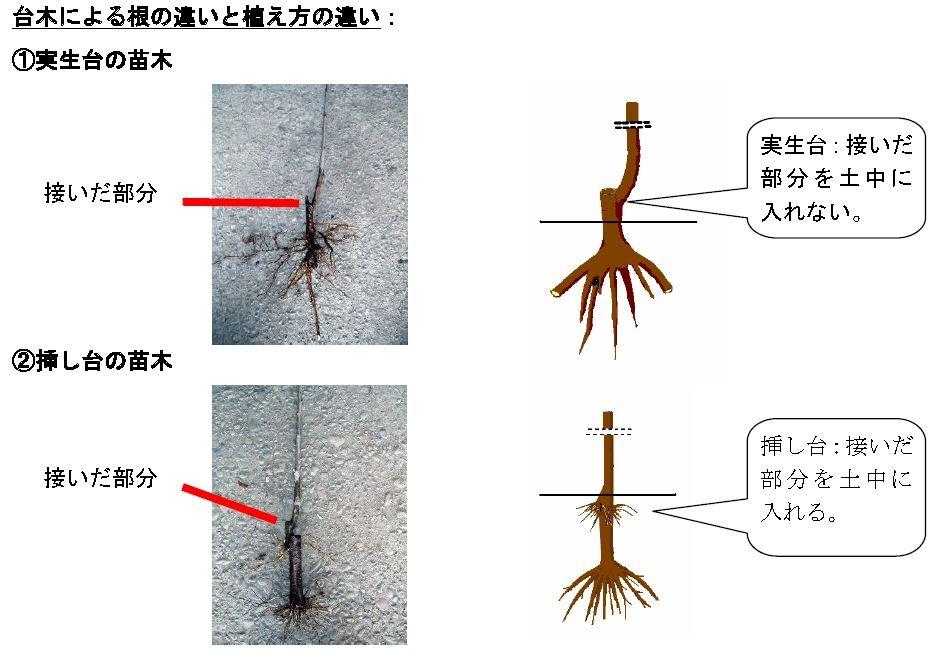 f:id:ogohnohito:20140202090459j:image:w320:right