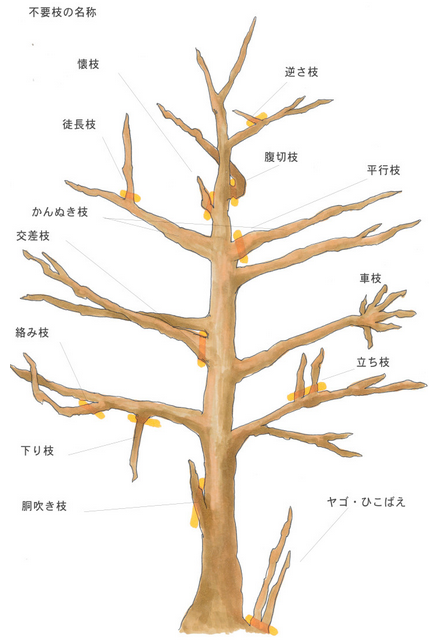 f:id:ogohnohito:20210608183720p:image:right:w240