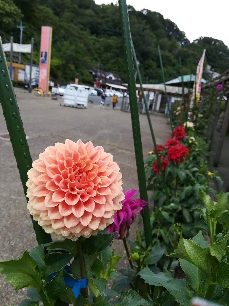 f:id:ogu-yuki-2-id:20180902194553j:plain