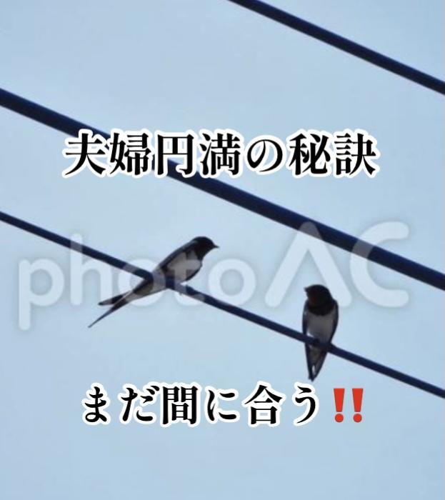 f:id:ohanablog87:20210531054839j:plain