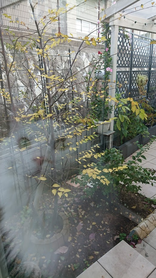 f:id:ohitorisama-daisuki:20201120110834j:plain