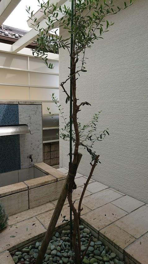 f:id:ohitorisama-daisuki:20201125185006j:plain