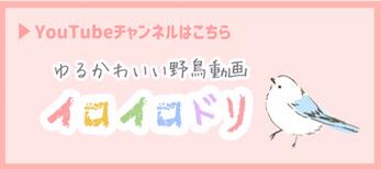 f:id:ohitorisama-enjoy:20200106201158j:plain