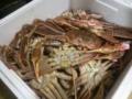 [twitter] 境港直送、蟹パーティー終了。今年の蟹は美味い!