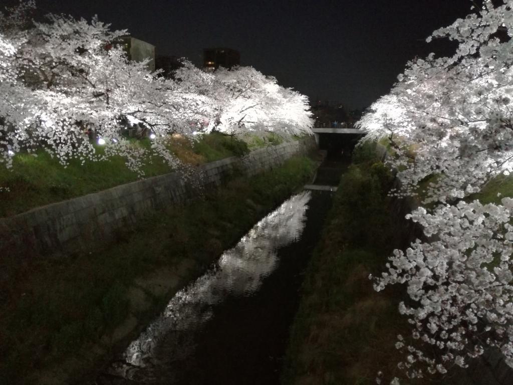 山崎川の夜桜