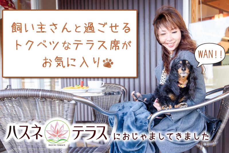 f:id:oishi-shogo:20200328152014j:plain