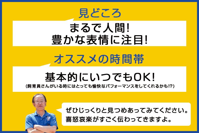 f:id:oishi-shogo:20200722210749j:plain
