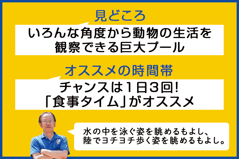 f:id:oishi-shogo:20200804192308j:plain