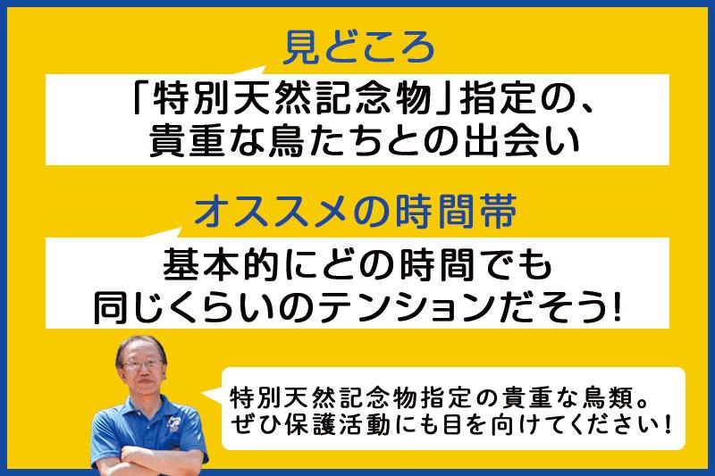 f:id:oishi-shogo:20200806155818j:plain