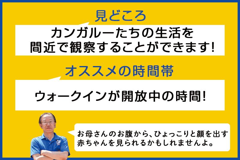 f:id:oishi-shogo:20200806162940j:plain