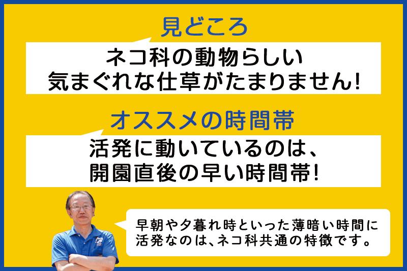 f:id:oishi-shogo:20200807184131j:plain