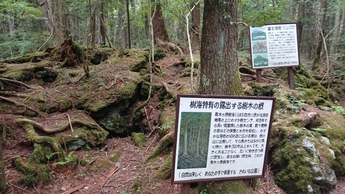 f:id:oisomachi-konkatsu-kekkon:20180804232457j:plain