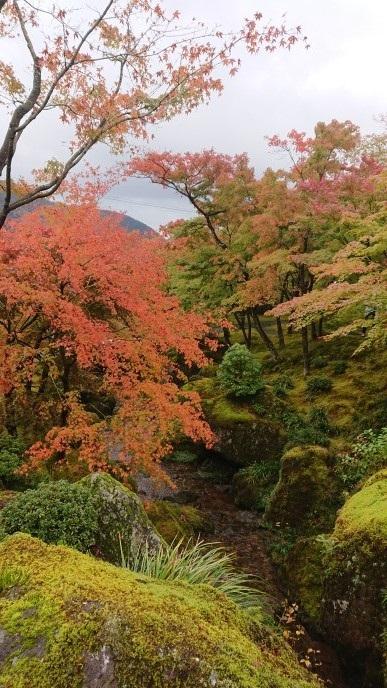 f:id:oisomachi-konkatsu-kekkon:20181108171133j:plain