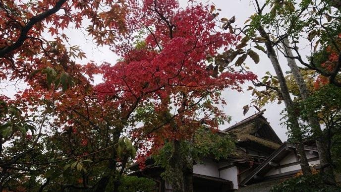 f:id:oisomachi-konkatsu-kekkon:20181108172425j:plain