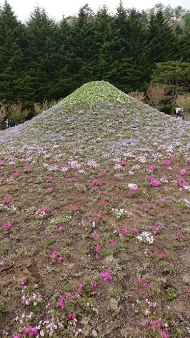 f:id:oisomachi-konkatsu-kekkon:20190508125906j:plain