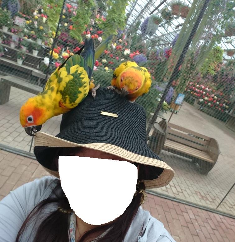 f:id:oisomachi-konkatsu-kekkon:20190508131622j:plain