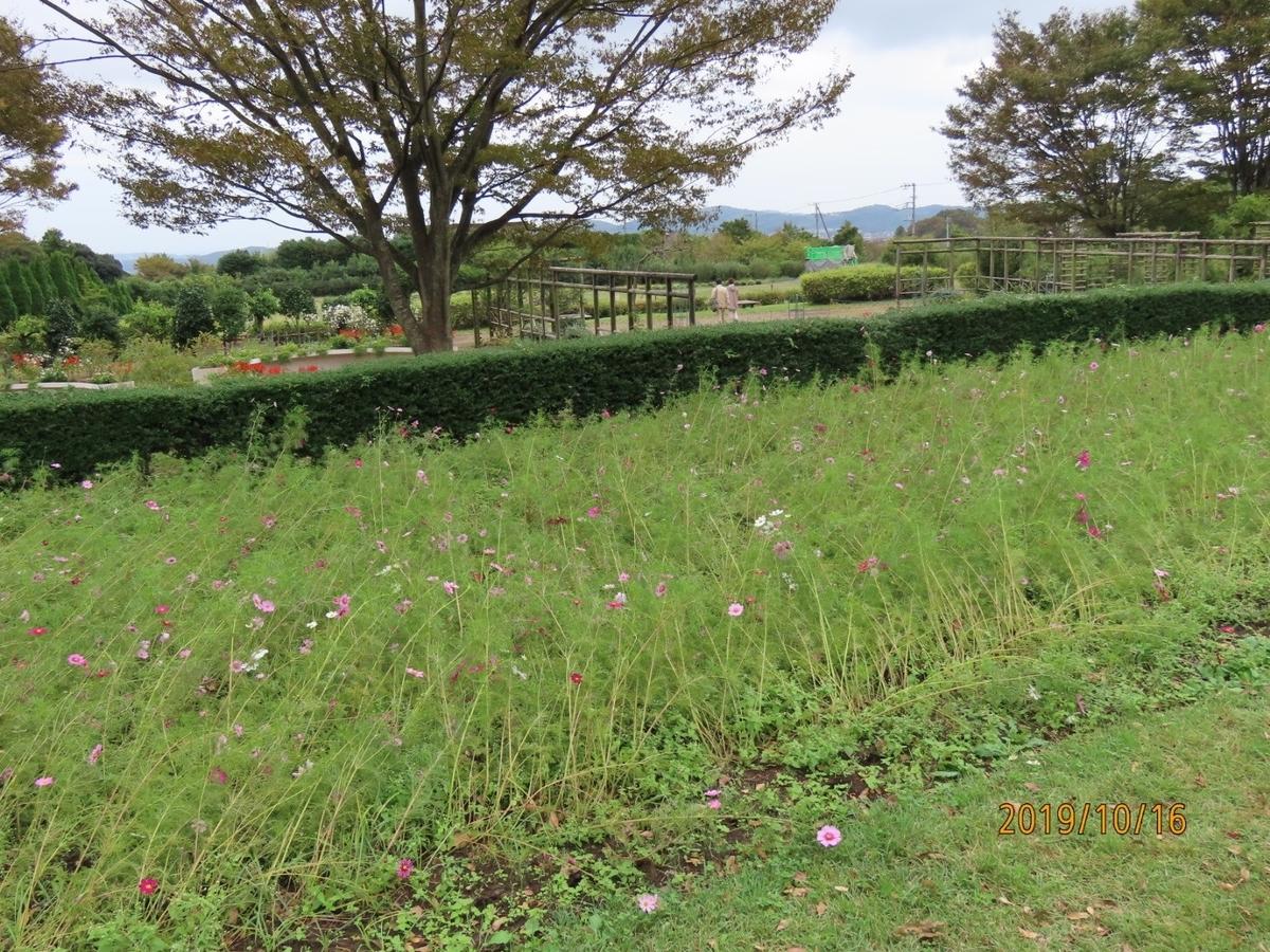 f:id:oisomachi-konkatsu-kekkon:20191017165851j:plain