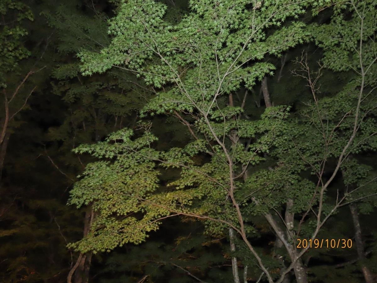 f:id:oisomachi-konkatsu-kekkon:20191101114338j:plain