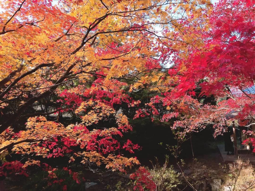 f:id:oisomachi-konkatsu-kekkon:20191115151545j:plain