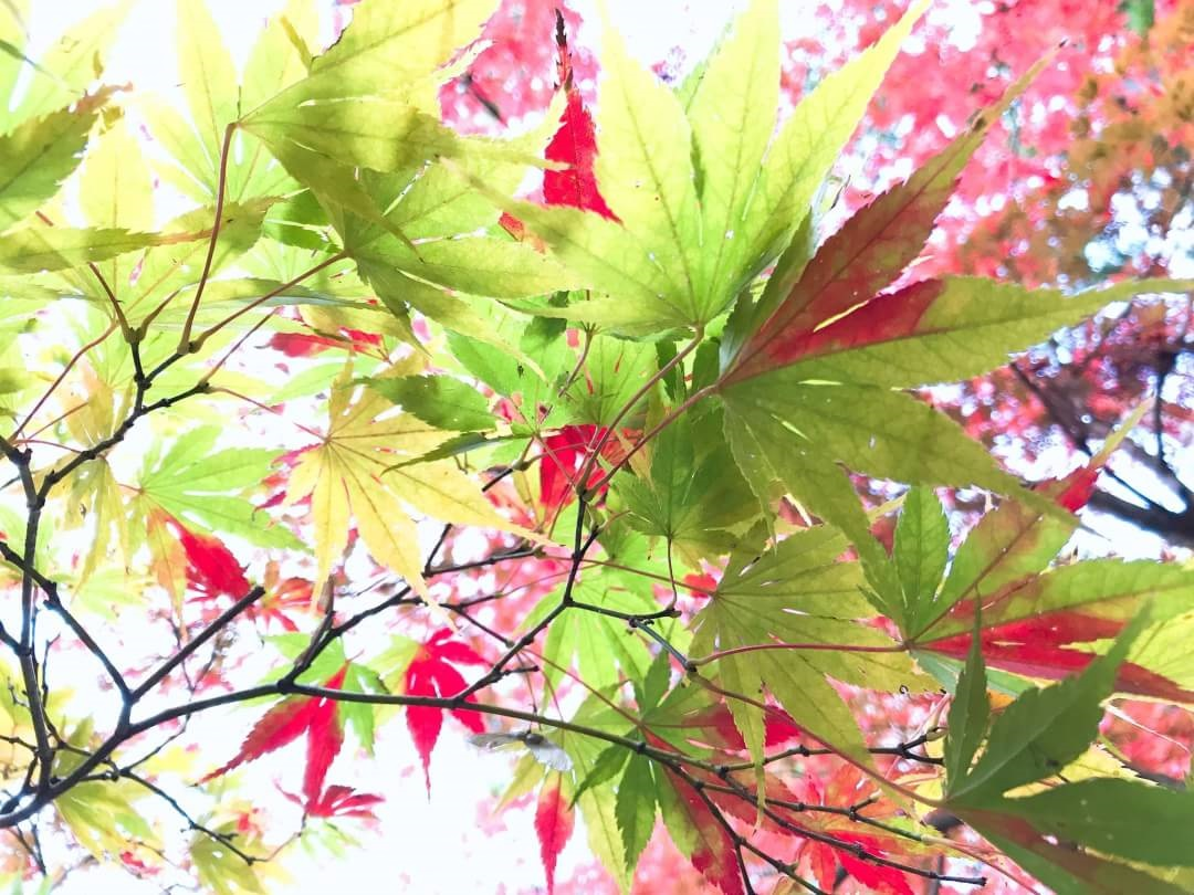 f:id:oisomachi-konkatsu-kekkon:20191115151633j:plain