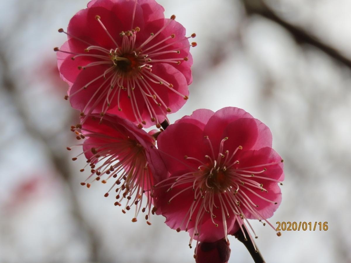 f:id:oisomachi-konkatsu-kekkon:20200118145819j:plain