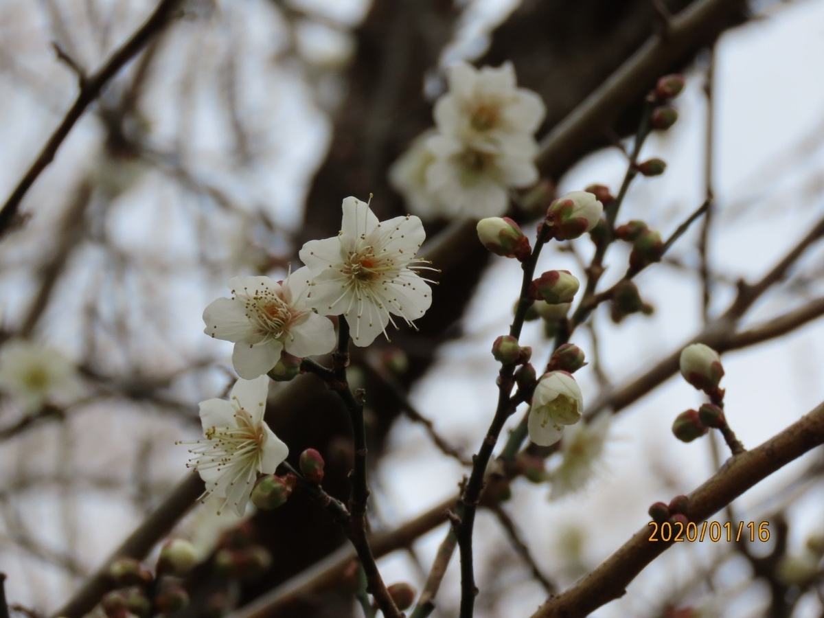 f:id:oisomachi-konkatsu-kekkon:20200118145902j:plain