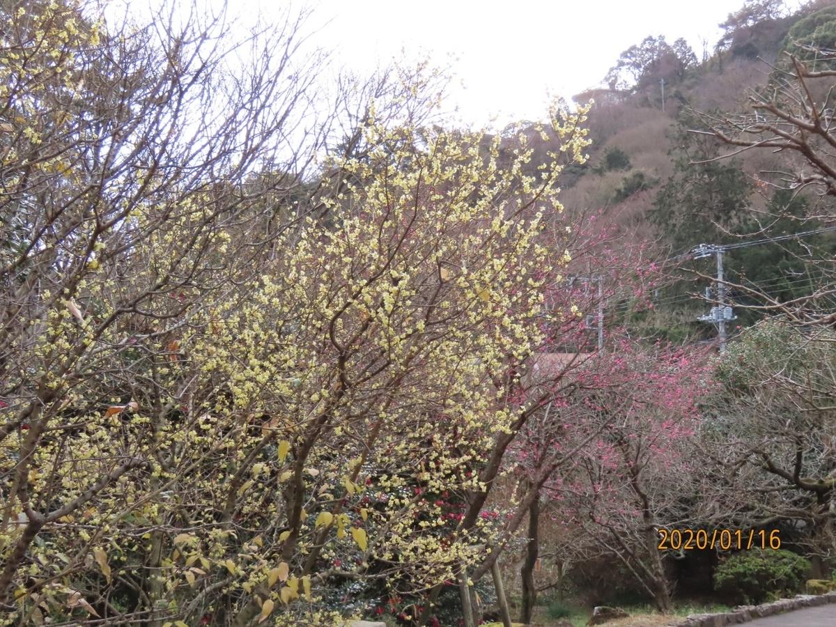 f:id:oisomachi-konkatsu-kekkon:20200118145917j:plain