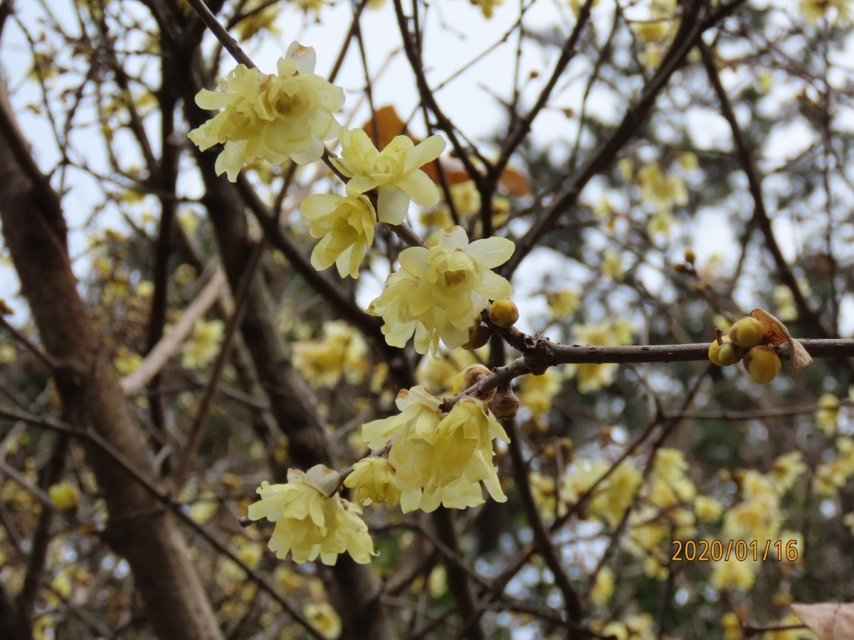 f:id:oisomachi-konkatsu-kekkon:20200118145932j:plain