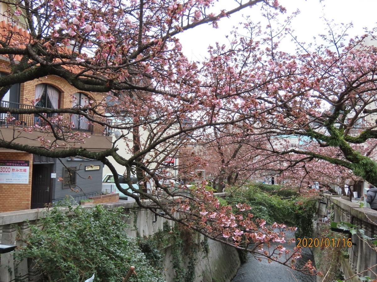 f:id:oisomachi-konkatsu-kekkon:20200118150345j:plain