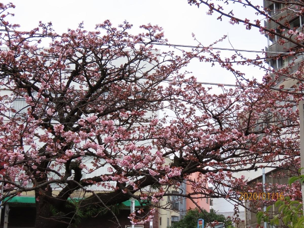 f:id:oisomachi-konkatsu-kekkon:20200118150357j:plain