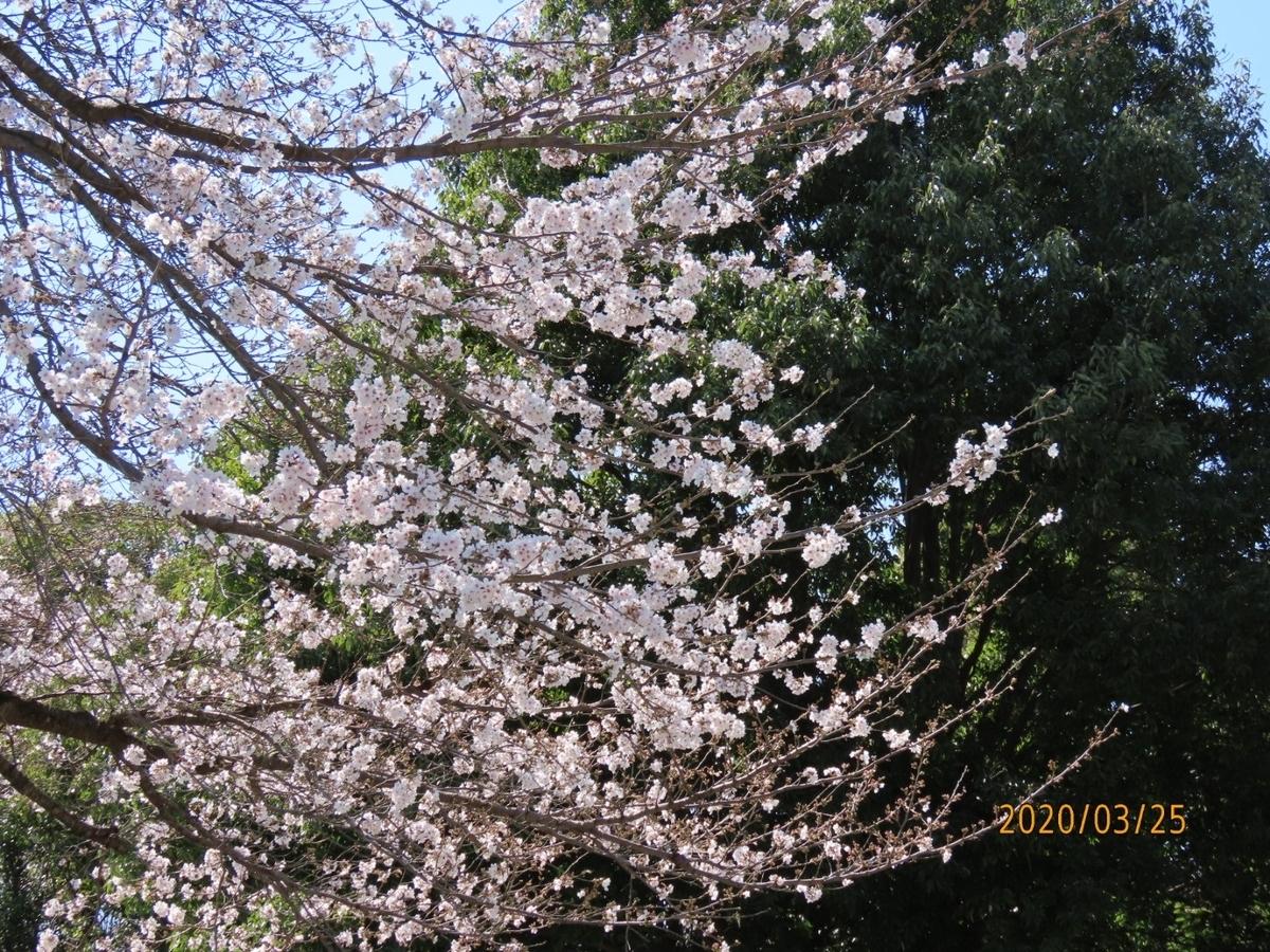 f:id:oisomachi-konkatsu-kekkon:20200326214425j:plain