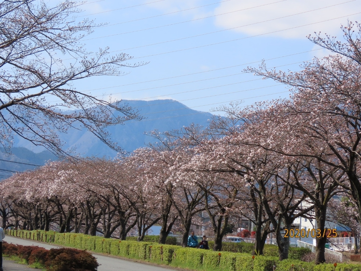 f:id:oisomachi-konkatsu-kekkon:20200326214646j:plain