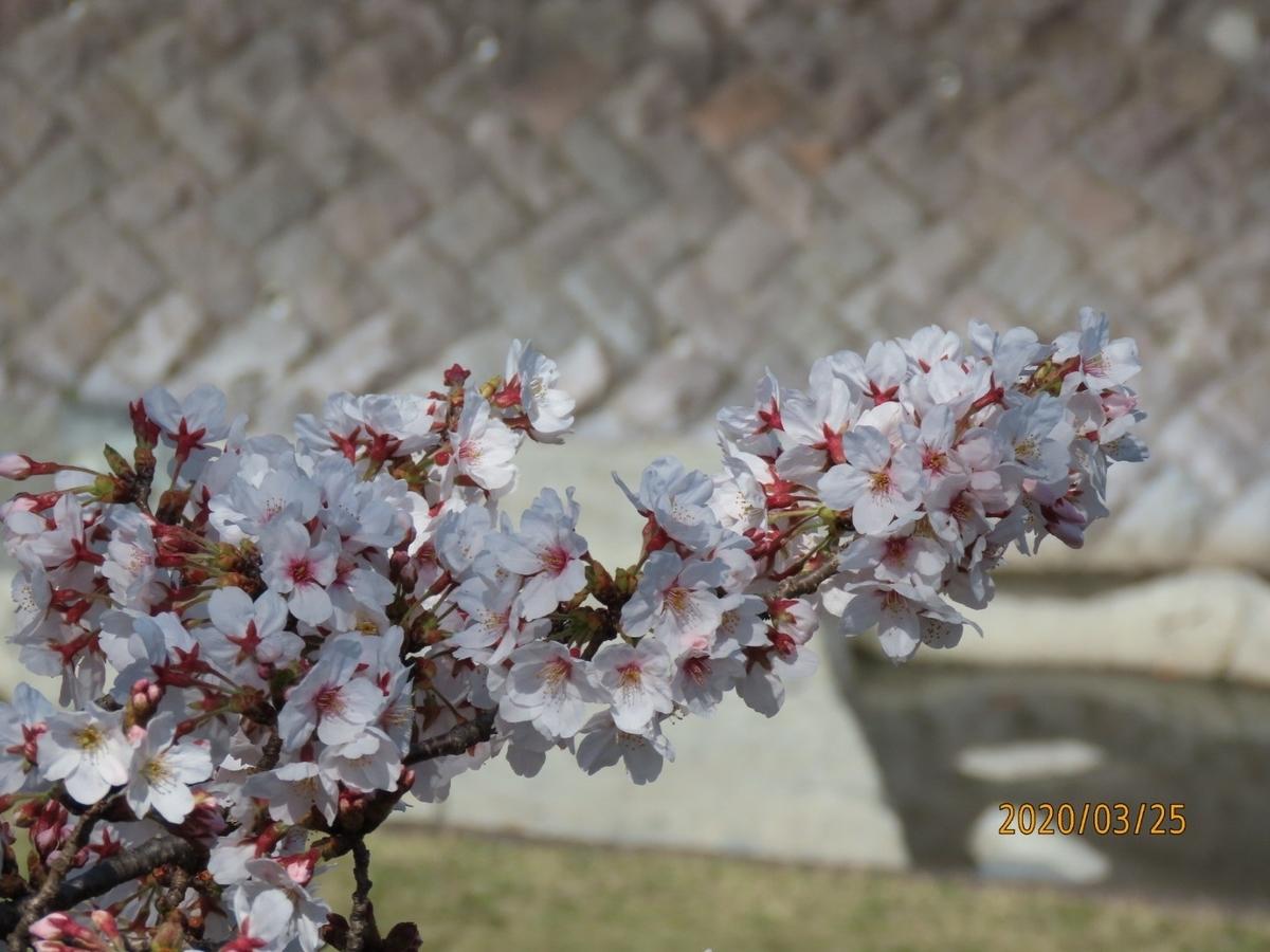 f:id:oisomachi-konkatsu-kekkon:20200326214724j:plain