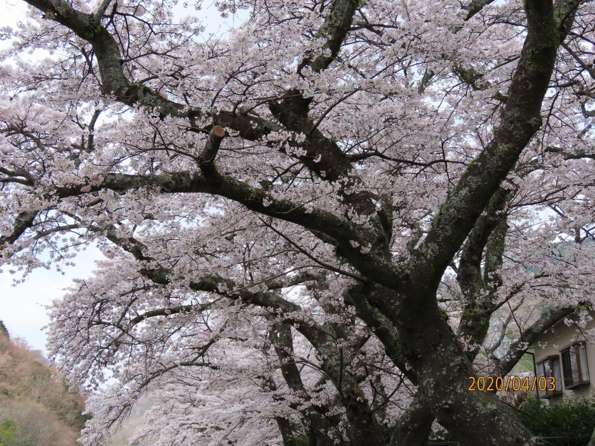 f:id:oisomachi-konkatsu-kekkon:20200407120248j:plain
