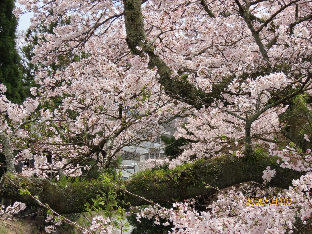 f:id:oisomachi-konkatsu-kekkon:20200407120337j:plain