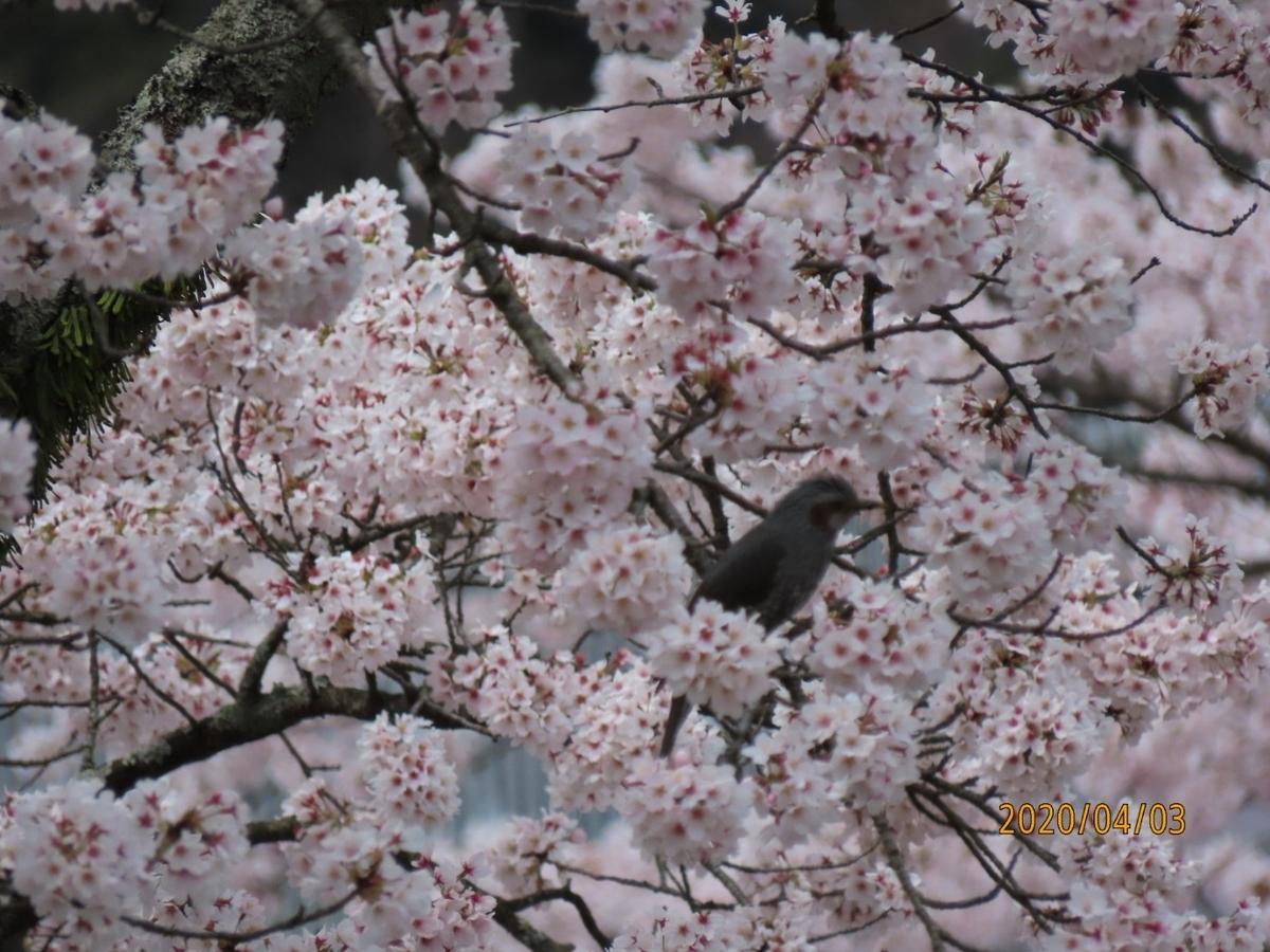 f:id:oisomachi-konkatsu-kekkon:20200407120507j:plain