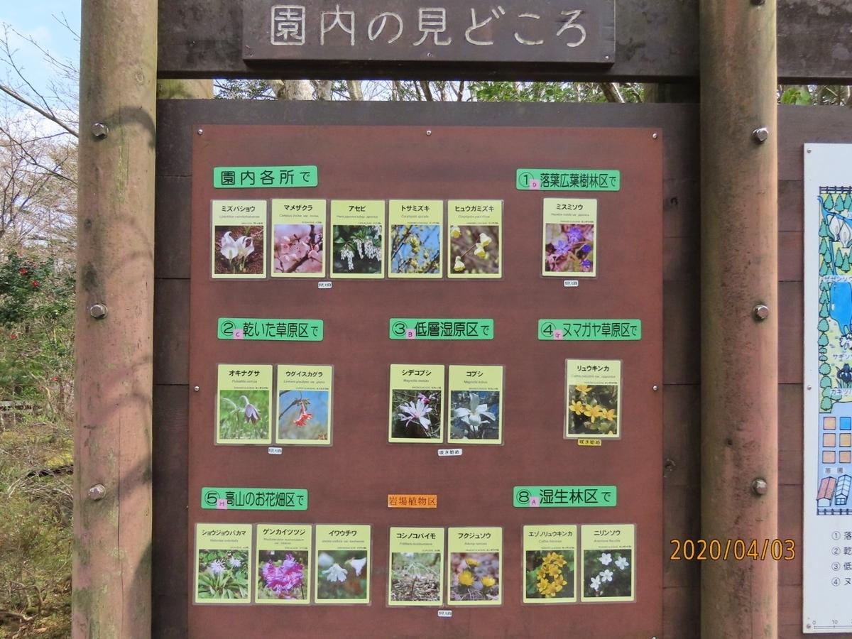 f:id:oisomachi-konkatsu-kekkon:20200407120548j:plain