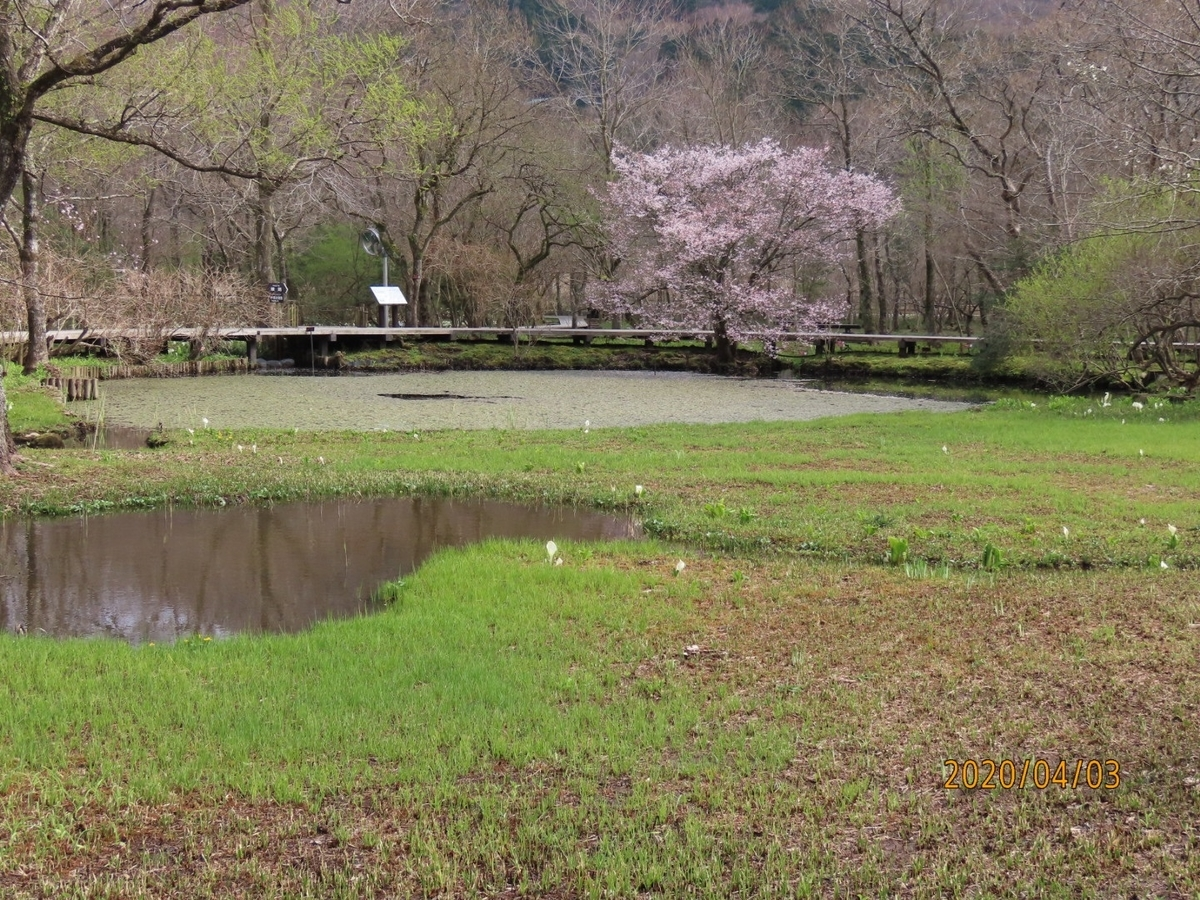 f:id:oisomachi-konkatsu-kekkon:20200407120619j:plain
