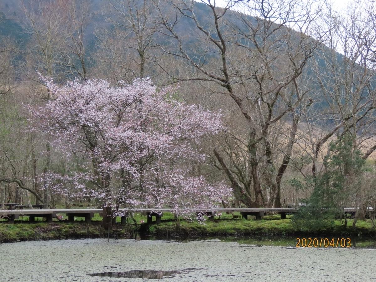 f:id:oisomachi-konkatsu-kekkon:20200407120631j:plain
