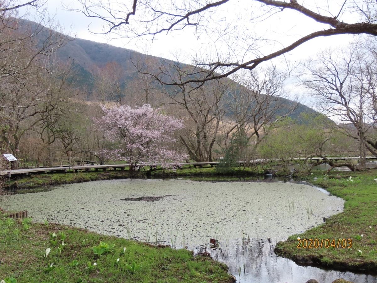 f:id:oisomachi-konkatsu-kekkon:20200407120647j:plain