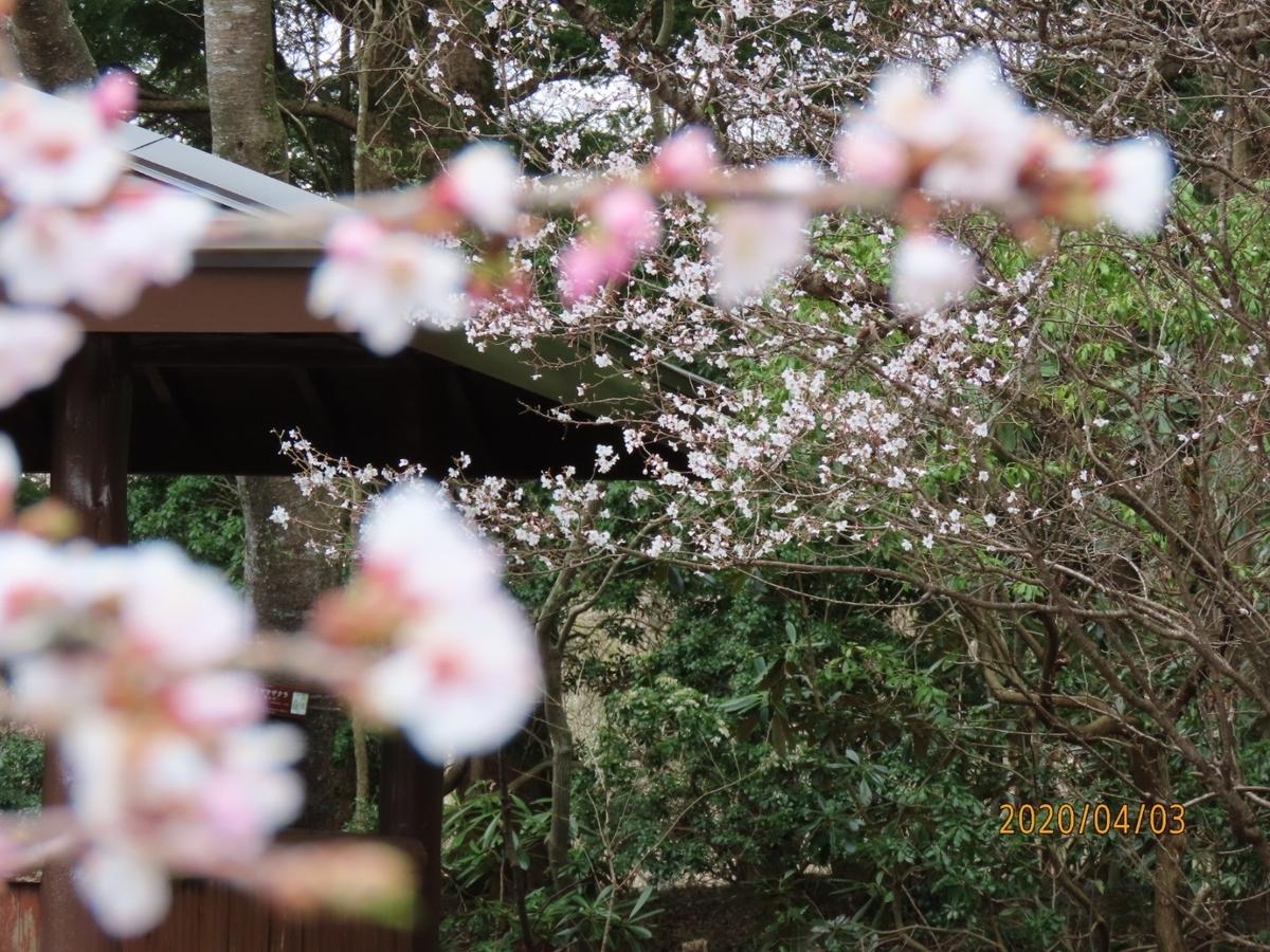 f:id:oisomachi-konkatsu-kekkon:20200407120831j:plain