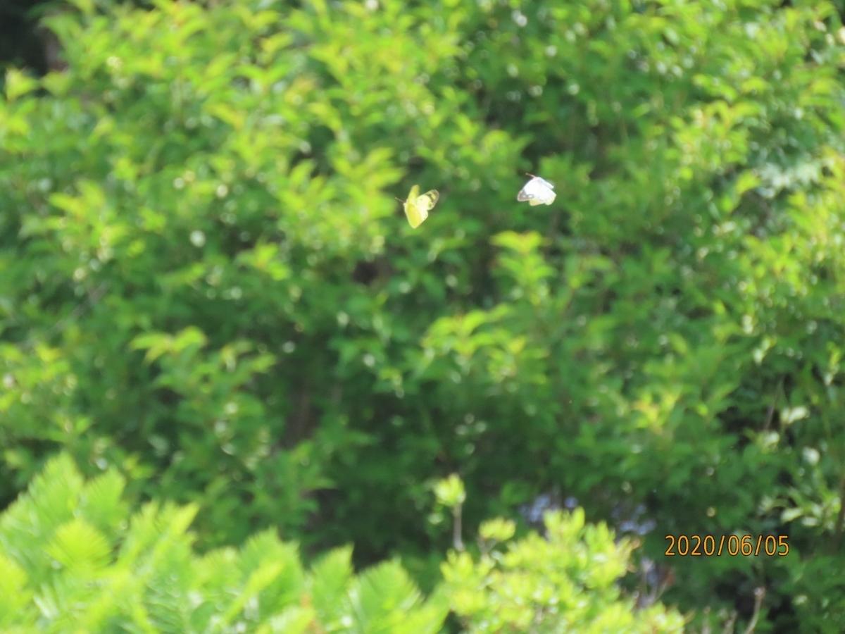 f:id:oisomachi-konkatsu-kekkon:20200606180836j:plain