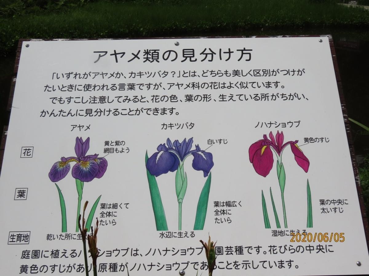 f:id:oisomachi-konkatsu-kekkon:20200606180957j:plain