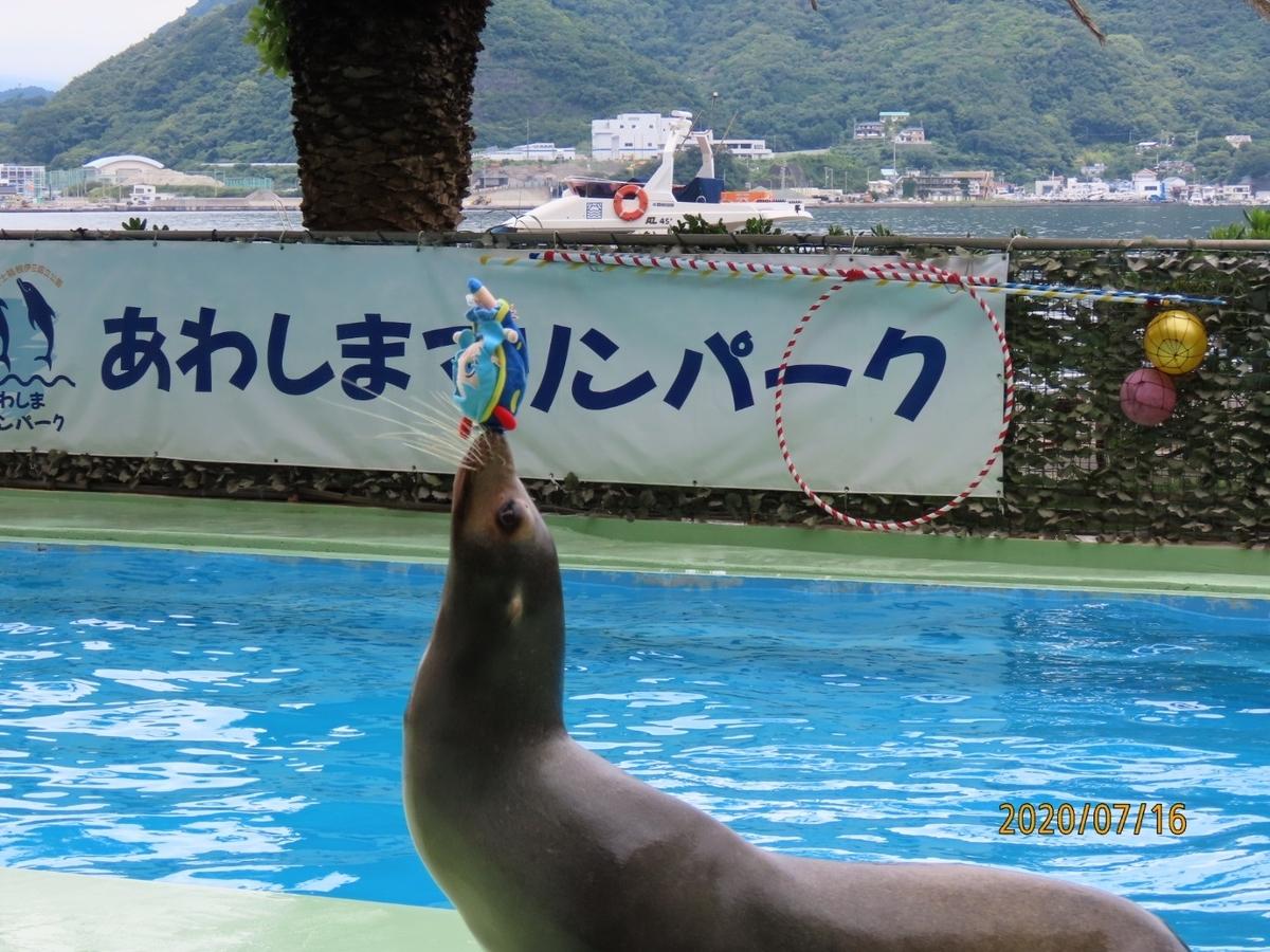 f:id:oisomachi-konkatsu-kekkon:20200717232600j:plain