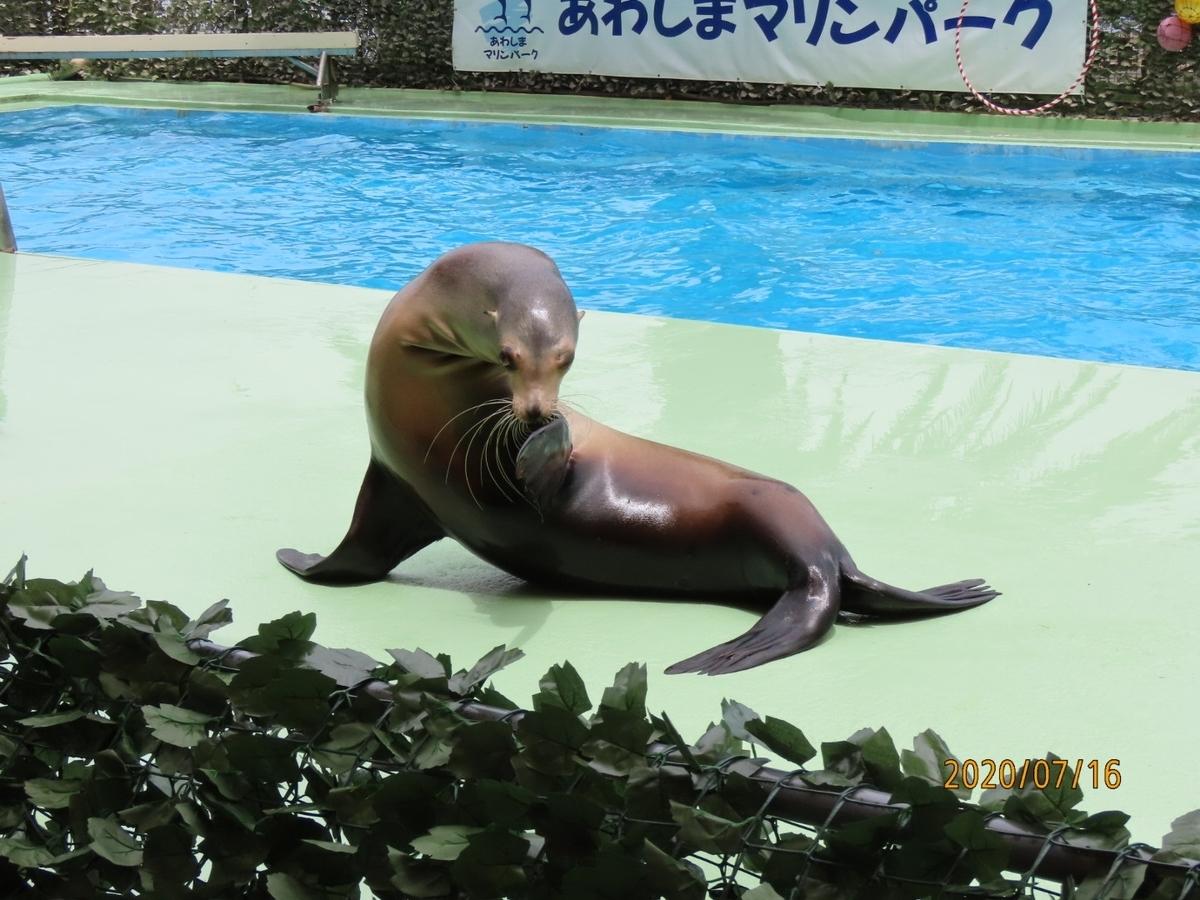f:id:oisomachi-konkatsu-kekkon:20200717232730j:plain